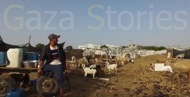 Histoires de Gaza : mon travail de berger Gaza-640x327